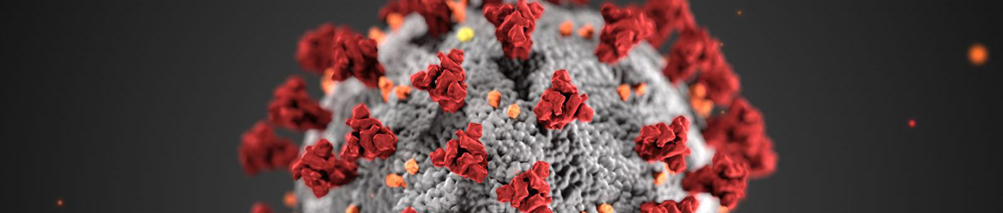 "A 3-D rendering of the microscopic coronavirus, depicting a grayish colored orb with numerous red ""flowers"" protruding."