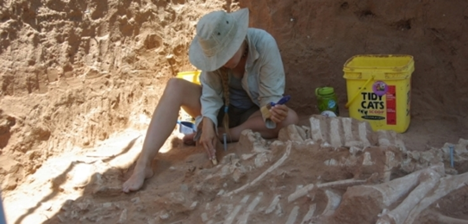 Student excavating ancient bison remains