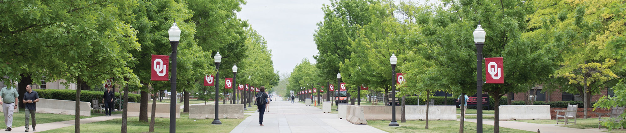 sidewalk with many trees and lampposts with OU flags on each side