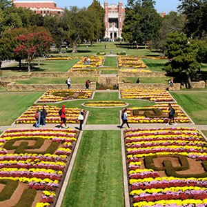 Mums on the South Oval